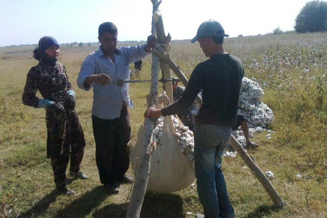 Tashkent accused of cotton slavery