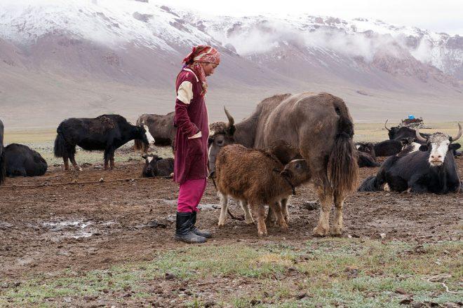 Uzbek-Tajik flights resume