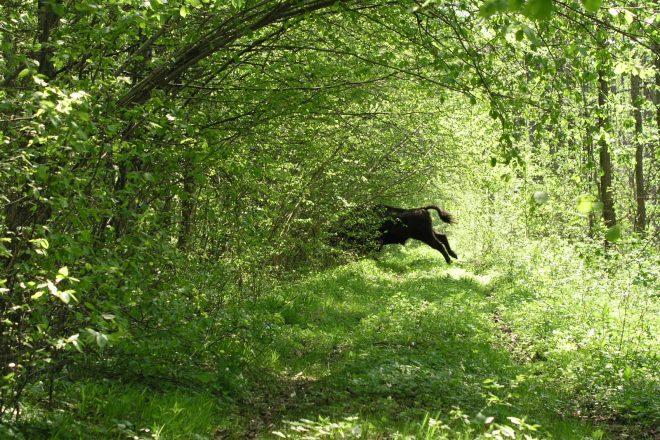 Poland ignores EU over logging