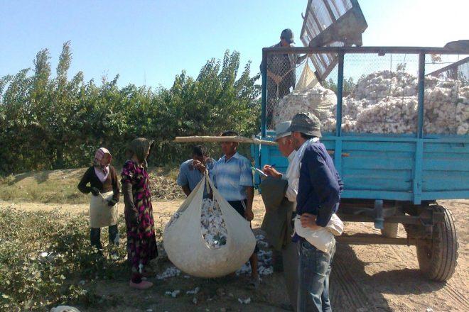 Students dodge Uzbek cotton harvest