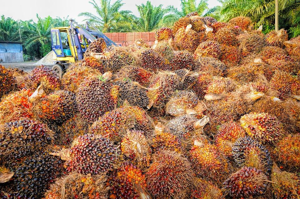 EU palm-oil enrages SE Asia exporters