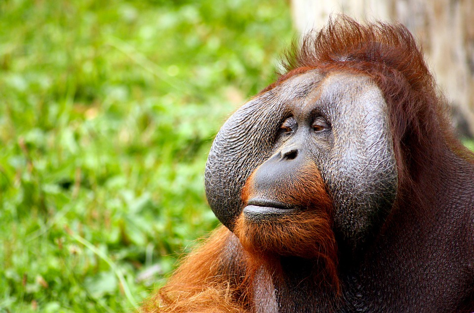 UK palm-oil ban angers producers