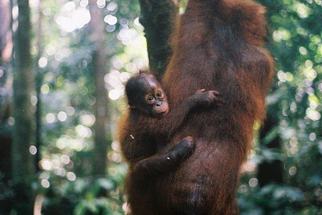 EU palm oil threat enrages Indonesia