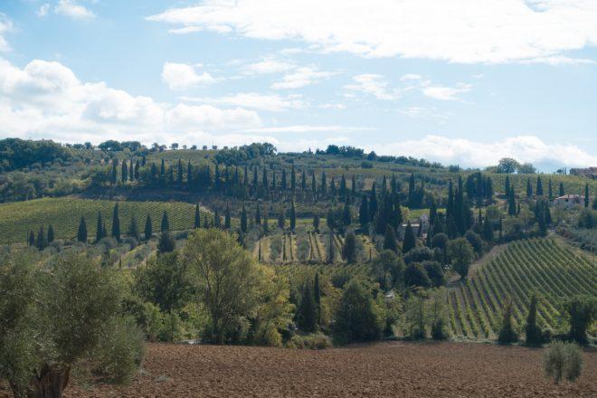 2018 : une année noire pour la production d'huile d'olive italienne