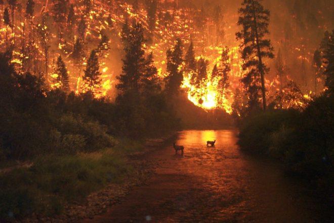 La Sibérie en flammes : Moscou pointé du doigt