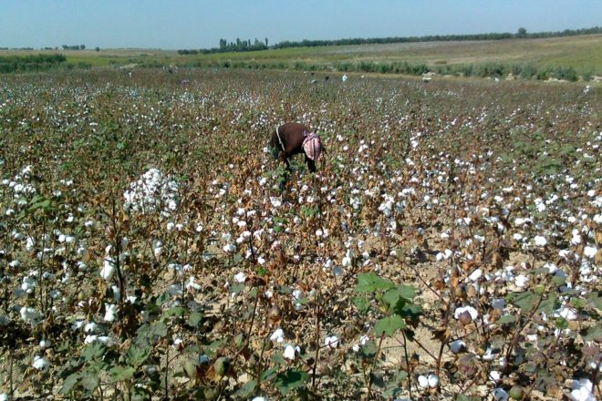 EU legal bid to block slave-tainted Uzbek cotton