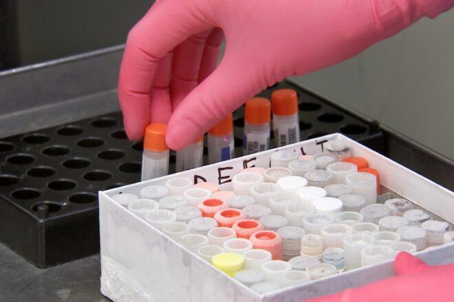 Le vaccin russe évalué par l'OMS